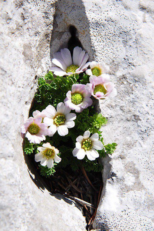 ?image=Manzara/Flower.in.rock.jpg