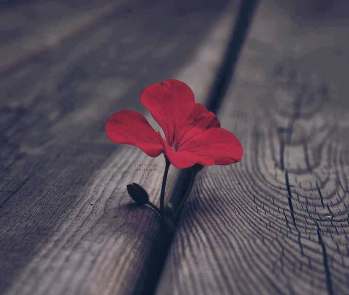 ?image=Manzara/Flower.red.wood floors.jpg