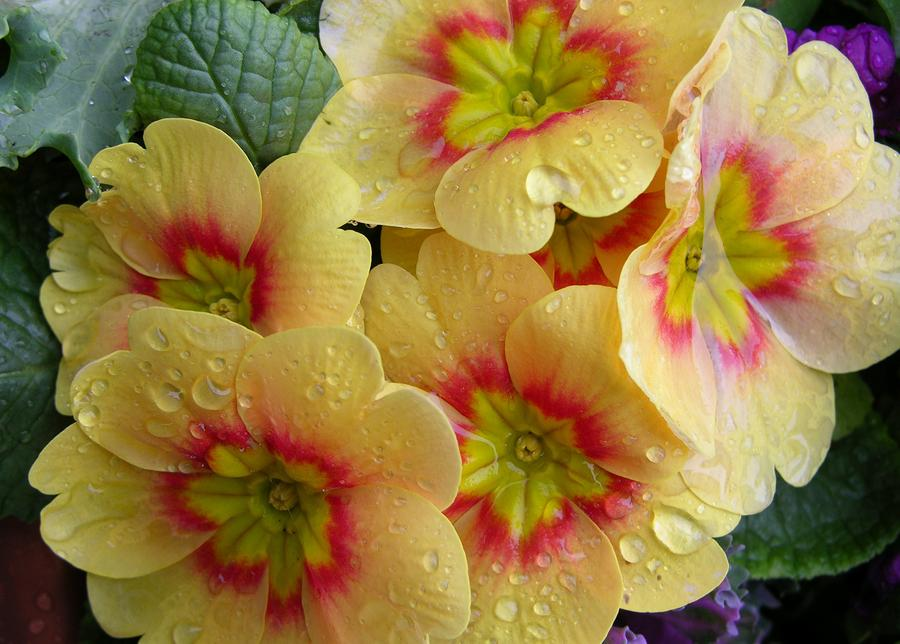 ?image=Manzara/flower-raindrops-on-yellow-flowers-carol-groenen.jpg